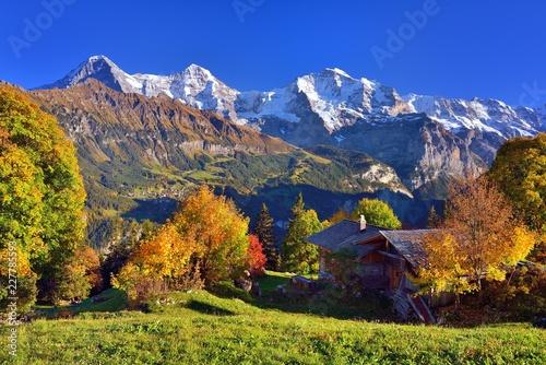 Chata alpejska z jesiennymi drzewami liściastymi, za zaśnieżonymi górami Eiger, Mönch i Jungfrau