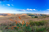 The Dargle valley in Kwa-Zulu Natal is a fertile place with many farms in the area. KZN, South Africa.