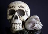 Human skull  head - 227826116