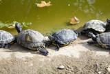 Turtles in lake - 227826163