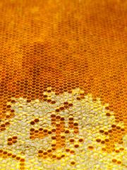 bee honeycombs.