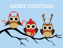 Christmas Owls Sticker