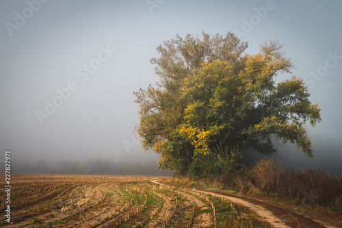 Foto Murales Footpath and tree in countryside at autumn fog morning