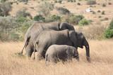 FAMILY OF THREE ELEPHANTS