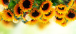 Quadro Fresh sunflowers over green garden background banner with copy space