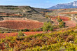 Leinwandbild Motiv Vineyard at Rioja Alavesa, Cantabria mountain range as background, Basque Country, Spain