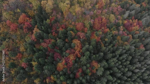 Sticker  colors of autumn in forest aerial view