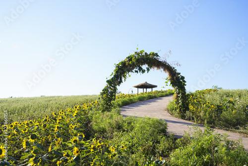 Foto Murales 메밀꽃이 하얗게 핀 시골 풍경