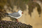 Peaceful gull resting on the shore