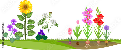 Wall mural Flower garden with different flowering plants