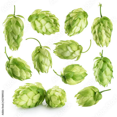 Foto Murales Hops isolated on white background.