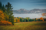 Autumn landscape in morning. Colorful meadow, trees and mist