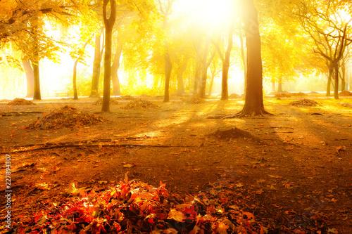 mata magnetyczna Autumn in a park