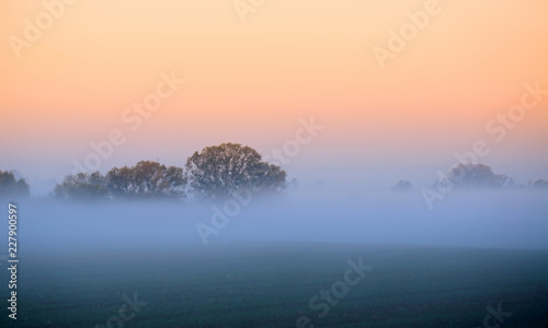 Foto Murales Autumn fog over the field under the trees