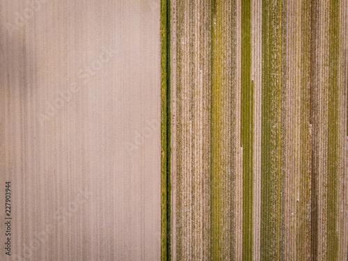 drone widok z góry, rolnictwo drone widok Holandia krajobraz z lotu ptaka