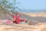 Summer beach in a tropical paradise with a  seashell and  starfish on golden sand. - 227907325