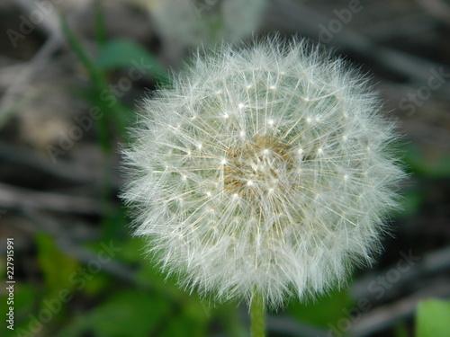 Summer flowers in a garden - 227915991