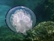 Quadro Medusa