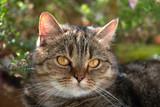 Getigerte Katze am Balkon