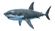 3d rendered illustration of a great white shark