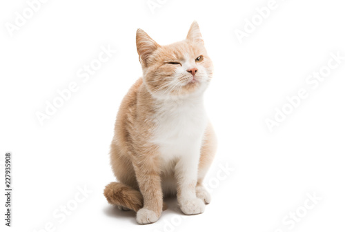 young cat isolated