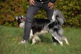 Hund läuft durch die Beine seines Besitzers