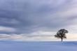 Quadro Dramatic Sky and Single Tree in Snow