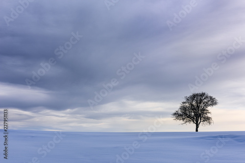 Dramatic Sky and Single Tree in Snow