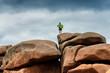 Leinwanddruck Bild - Felsformationen an der Cote Granit Rose, Bretagne