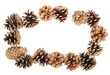 Frame pine cones isolated on white background, top view