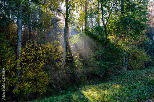 sun reys through autumn colored tree leaves