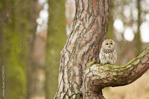 Foto Murales Owl