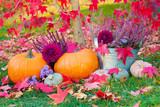 Bunte Herbst Dekoration im Garten -  Kürbisse, Blumen und Herbstlaub