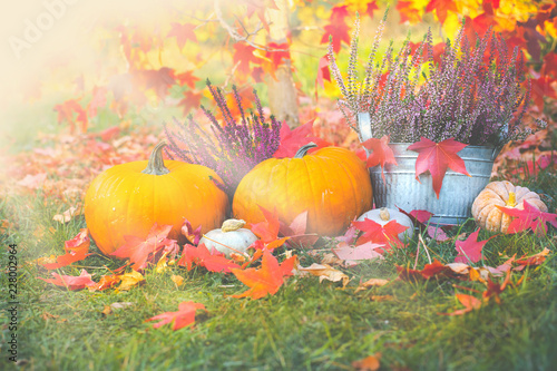 Autumnal garden decoration with pumpkins, leaves  and heather flowers