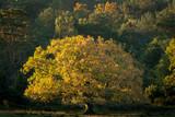Glowing tree - 228018155