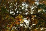 Leaves at sunrise - 228018309