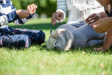 Cute little furry rabbit in a grass