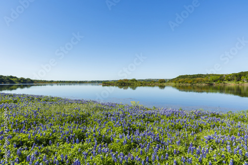 Foto Murales Beautiful bluebonnets along a lake in the Texas Hill Country.