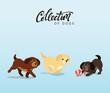 Cute dogs labrador and golden retriever. Flat animal cartoon character.