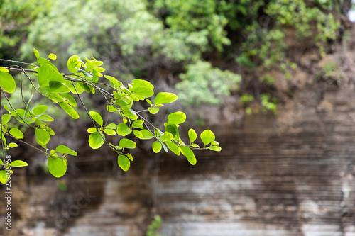Foto Murales folhas verdes