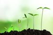 Quadro Growth of new life on  background