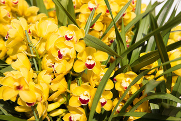 gardening, botany, texture and flora concept - beautiful yellow orchid flowers
