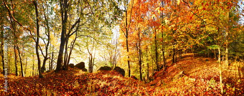 Autumn forest in mountain at sunset with sun - 228066959
