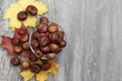 Brown chestnuts on the background of autumn leaves