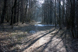 Spring forest with the remains of snow in the early morning. Sun rays on the path. - 228077755