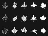 white maple icons on black background