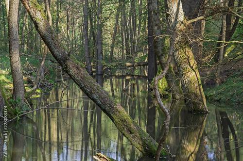 Foto Murales Dzika, nieuregulowana rzeka.