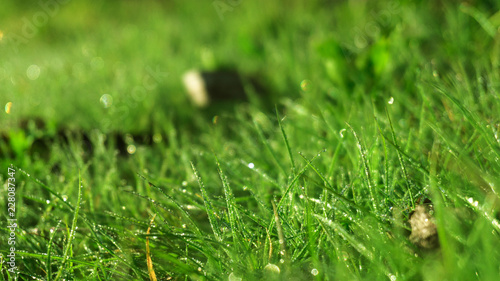 Morning dew on the grass, sunlight, rays, water drops, shine. Vegetative natural background, autumn grass. Morning in the sun, close-up. Background bokeh. - 228087347
