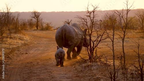 Naklejka Rhinos in Zambezi National Park, Zimbabwe