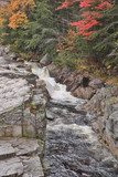 Beautiful Fall colors and fauna of the White Mountain National Forest in New Hampshire, USA